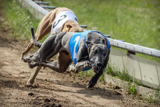 Greyhound race, for 'Hva er kryptovaluta'